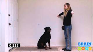 Brain Training for Dogs – The Airplane Game Exam Demonstration